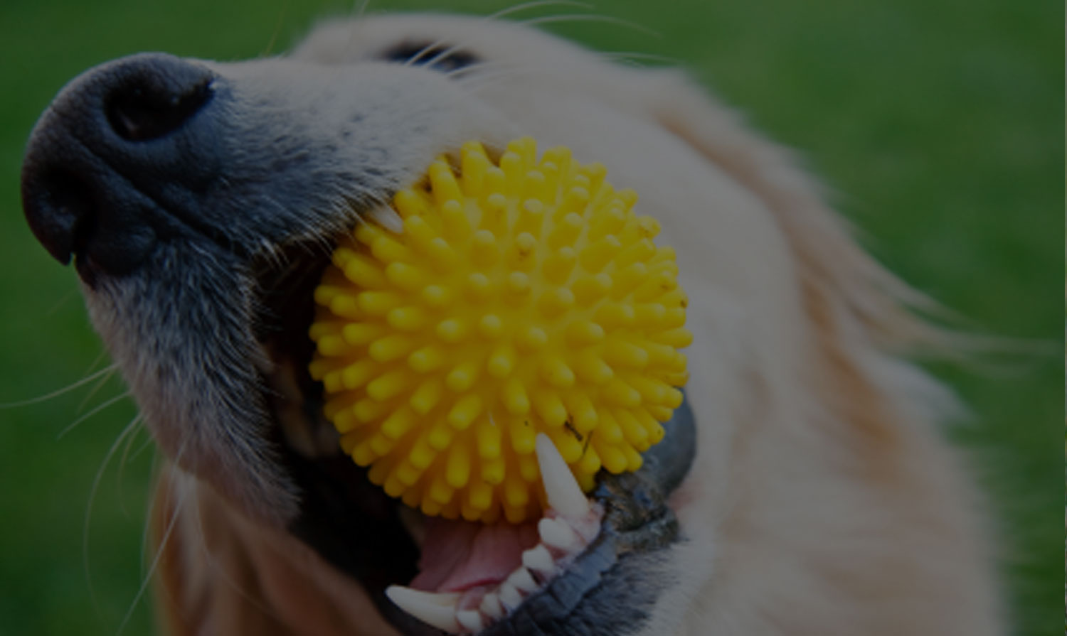 Happy Dog. Good No Soya With Happy Dog. Daycare Dogs With ... - photo#4